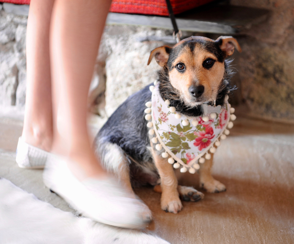 Elope To One Of Cornwall's Small Intimate Dog Friendly Wedding Venues